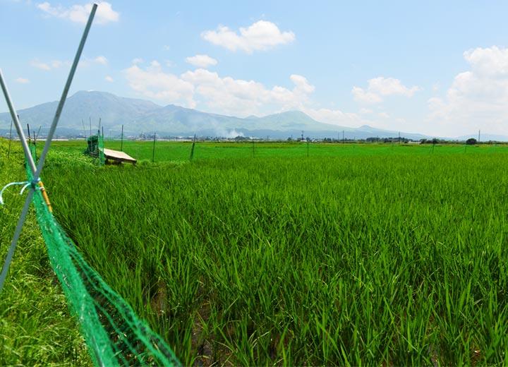 田んぼを取り囲むネット。アイガモの脱走防止と獣による被害防止の役目を持つ。