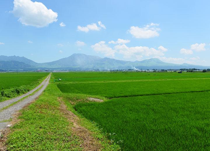 阿蘇五岳を臨む平野部に位置する後藤さんの田んぼ。夏は景色一杯の緑が広がる。
