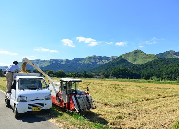この日は青空が広がり、絶好の稲刈り日和となった。早ければ稲刈りより2日後には当店へ入荷する。