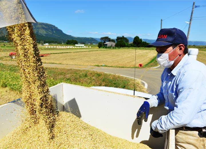 コンバインで収穫した籾はトラックに載せてライスセンターへ運ばれ、すぐに乾燥施設へ投入される。