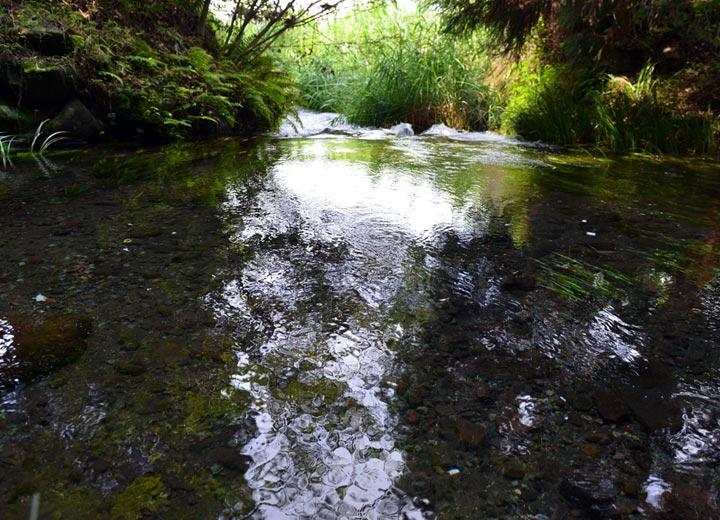 田んぼに使用している水は100%阿蘇の天然水。