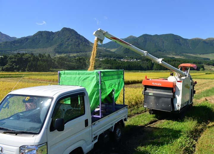 稲刈り時期はコンバインのオペレーターとして大忙しの北野さん。この日も朝から晩まで稲刈りを行っていた。