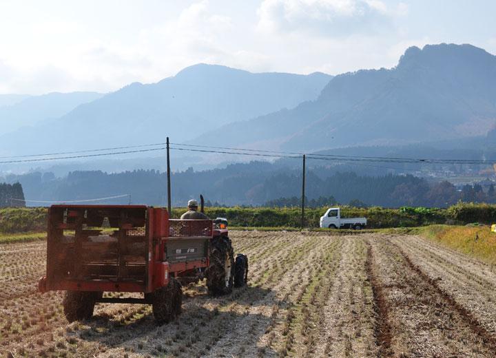 トラクターで田んぼに牛若丸をくまなく施肥していく。完熟堆肥のため匂いは全くない。環境だけでなくご近所にも優しい肥料なのだ。