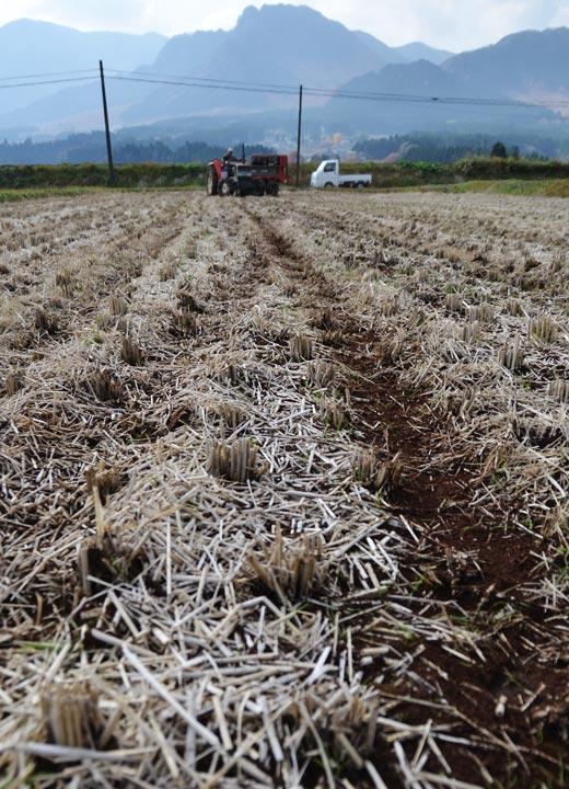 「牛若丸」を施肥した田んぼ。直接のシーズンではない冬場にもこうして作業を行う。