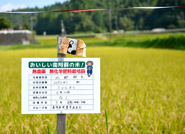 北野鉄矢さんの田んぼと無農薬栽培を示す立て看板。