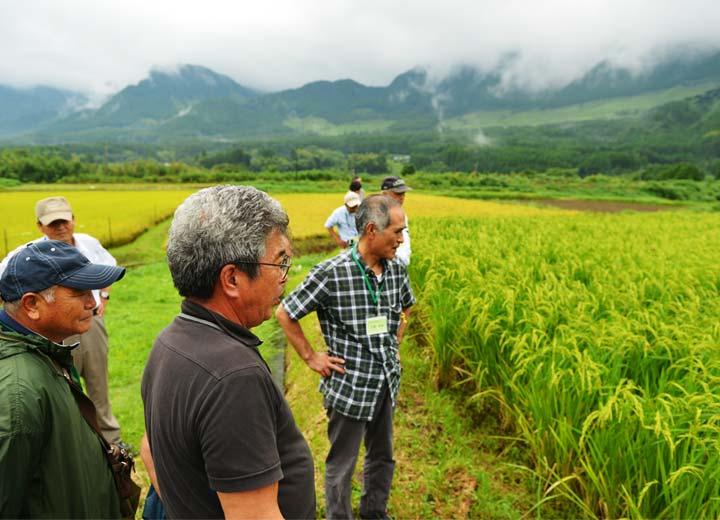 環境保全型農業技術研究会の阿蘇勉強会の様子。長野さんの山田錦の水田を見に来た見学者に農法などを説明している。