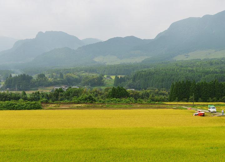 稲刈り当日の長野さんの田んぼ。晴天ではないが雨の予報はなく、稲刈り日和といえる。