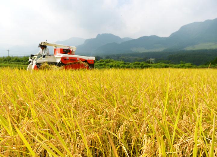 コンバインを動かすのも長野さん。周囲からゆっくりと稲を刈っていく。