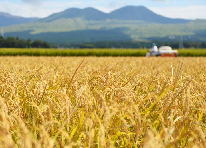 阿蘇の山々を背景に、ゆっくりと稲を刈っていく。