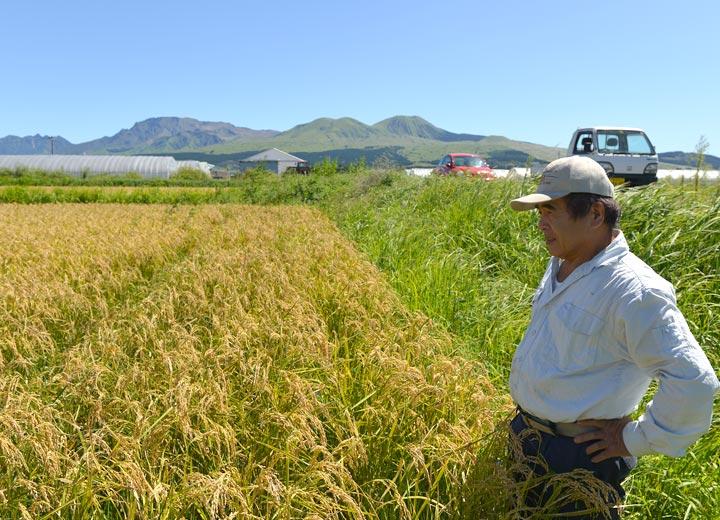 稲の様子を見ながら取材に答える西田さん。