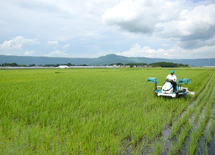 7月初旬、除草機をかける西田さん。