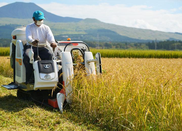 稲を刈る西田さん。小型のコンバインのため一枚の田を刈るのに数時間要する。