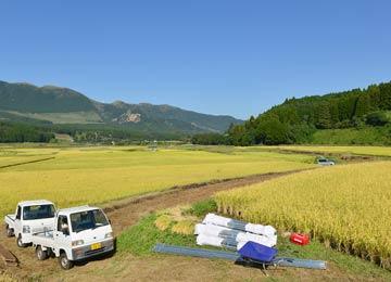 大森さんの田んぼ。田の畦に積まれているのは掛け干し用のアルミ脚。竹や木の脚と違って、丈夫で倒れにくい。