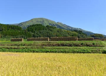 10月中旬の稲刈り日和。南阿蘇の田園地帯に、なにやら見慣れぬものがあります。