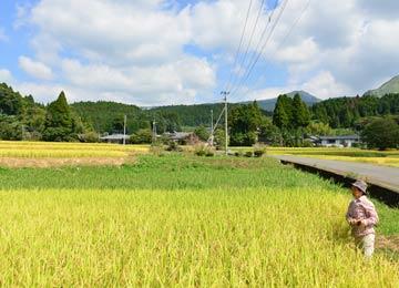 高島さんのヒノヒカリの田んぼ。高島さんは水源を探るべく、田の脇を通る水路を辿っていったのだ。