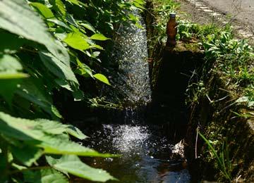 この辺りの田は全て阿蘇山の伏流水を農業用水として使用している。水量は安定しないが、水質は抜群だ。