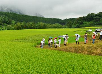夏に行われた環境保全型農業技術研究会の勉強会の様子。手前が北野鉄矢さんの山田錦の田で、その奥が高島さんの田。