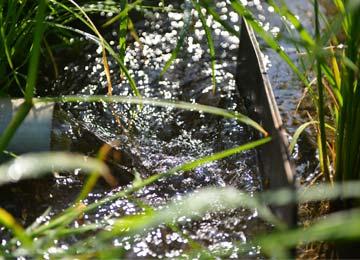 阿蘇山から湧き出た水はそのまま田へと流れこむ。とても冷たく、とても新鮮だ。